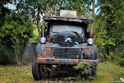 A wild Truck